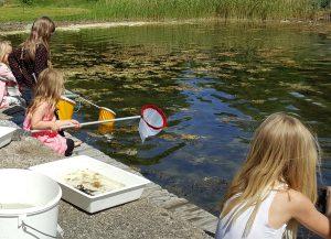 Barn som håvar djur och växter på Sävödagen.